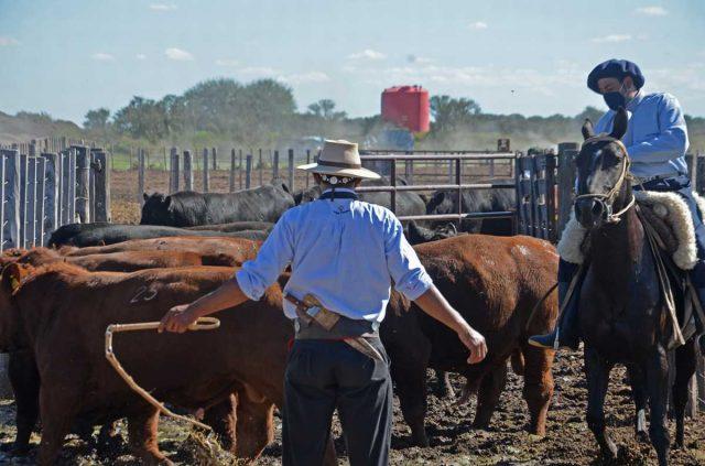 Comenzaron las juras fenotípicas en la Prueba Pastoril Angus Centro. En las instalaciones de Tigonbu se realizó la primera de tres juras que se hacen a lo largo del año.