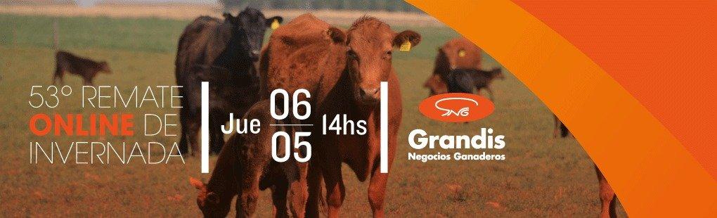 Grandis Negocios Ganaderos realiza su 53° remate online de invernada, este Jueves 06 de Mayo de 2021 desde las 14 hs.